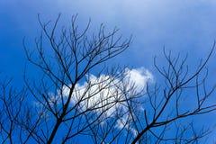 κλάδος του νεκρού δέντρου με το όμορφο υπόβαθρο μπλε ουρανού και σύννεφων Στοκ Φωτογραφία