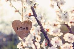 Κλάδος των βερίκοκων με τα λουλούδια Ξύλινη καρδιά στον κλάδο Ξύλινη καρδιά στοκ φωτογραφία