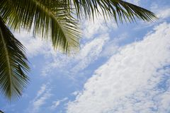 Κλάδος φοινικών ενάντια στο νεφελώδη μπλε ουρανό, τροπικό floral πλαίσιο στοκ εικόνες