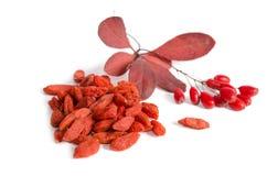 Κλάδος ώριμα κόκκινα barberries και των ξηρών μούρων goji Στοκ φωτογραφία με δικαίωμα ελεύθερης χρήσης