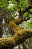 κλάδος mossy στοκ φωτογραφία με δικαίωμα ελεύθερης χρήσης