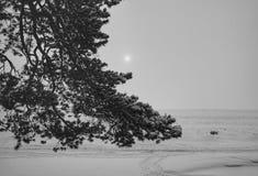 κλάδων ουρανού χειμερινών ήλιων χιονιού κρύος ημέρας πάγος λιμνών δέντρων δασικός Στοκ εικόνα με δικαίωμα ελεύθερης χρήσης