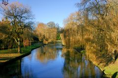 Κλάμα των ιτιών Salix Babylonica που απεικονίζουν στη λίμνη στοκ εικόνες με δικαίωμα ελεύθερης χρήσης