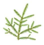 Κλάδος χριστουγεννιάτικων δέντρων Στοκ Φωτογραφία
