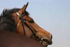 κλήση του αλόγου Στοκ φωτογραφία με δικαίωμα ελεύθερης χρήσης