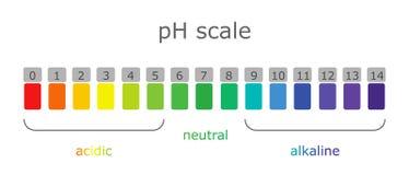 Κλίμακα pH με τις χρωματισμένες ετικέτες των περιβαλλόντων και τα προϊόντα με τα διαφορετικά επίπεδα οξύτητας διανυσματική απεικόνιση