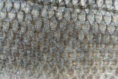 κλίμακες ψαριών ανασκόπησ Στοκ Εικόνα