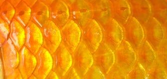κλίμακες ψαριών Στοκ Εικόνες