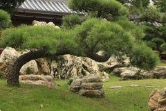 Κλίνοντας δέντρο μπονσάι, Chi μονή καλογραιών Lin, Χογκ Κογκ Στοκ Εικόνες