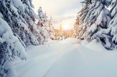 Κλίσεις χιονιού στο δάσος Στοκ Εικόνα