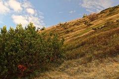 Κλίση μια ηλιόλουστη ημέρα στα βουνά στοκ φωτογραφίες