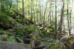Κλίση στο θερινό δάσος Στοκ Εικόνα