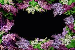 Κλαδάκια της πασχαλιάς των διαφορετικών χρωμάτων που διαμορφώνουν ένα πλαίσιο με ένα διάστημα αντιγράφων στοκ φωτογραφία
