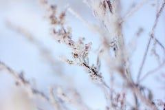 Κλαδάκι το χειμώνα, κλαδίσκος στο χιόνι Στοκ εικόνα με δικαίωμα ελεύθερης χρήσης