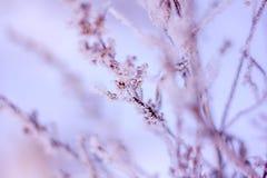 Κλαδάκι το χειμώνα, κλαδίσκος στο χιόνι Στοκ εικόνες με δικαίωμα ελεύθερης χρήσης