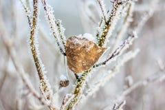 Κλαδάκι το χειμώνα, κλαδίσκος στο χιόνι Στοκ φωτογραφία με δικαίωμα ελεύθερης χρήσης