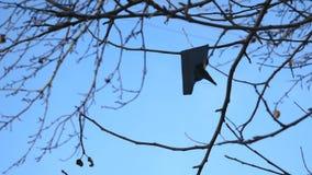Κλαδίσκοι και φύλλα στην ταλάντευση δέντρων από τον αέρα ύφασμα κουρελιών, ενάντια στο μπλε ουρανό απόθεμα βίντεο