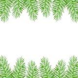 Κλαδίσκοι των πράσινων ερυθρελατών Χριστουγέννων ελεύθερη απεικόνιση δικαιώματος