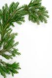 κλαδίσκος δέντρων έλατο&up Στοκ Φωτογραφία