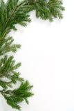 κλαδίσκος δέντρων έλατο&up Στοκ φωτογραφία με δικαίωμα ελεύθερης χρήσης