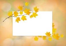 Κλαδίσκος σφενδάμνου φθινοπώρου με τα κίτρινα φύλλα και μια άσπρη κάρτα Στοκ εικόνα με δικαίωμα ελεύθερης χρήσης