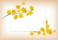 Κλαδίσκος σφενδάμνου φθινοπώρου με τα κίτρινα φύλλα και μια άσπρη κάρτα Στοκ φωτογραφία με δικαίωμα ελεύθερης χρήσης