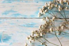 Κλαδίσκος Gypsophila της μικρής άσπρης κινηματογράφησης σε πρώτο πλάνο λουλουδιών σε ένα μπλε υπόβαθρο στοκ φωτογραφίες με δικαίωμα ελεύθερης χρήσης