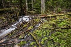 Κλαδιά δέντρων στο έδαφος από ένα ρεύμα βουνών Στοκ εικόνες με δικαίωμα ελεύθερης χρήσης