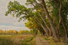 Κλασικός δρόμος ελών φθινοπώρου στοκ φωτογραφία