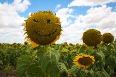 Κλείσιμο του ματιού προσώπου Smiley ηλίανθων Στοκ Φωτογραφίες