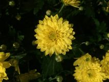 Κλείστε αυξημένος ενός λουλουδιού Στοκ εικόνες με δικαίωμα ελεύθερης χρήσης