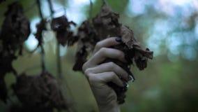 Κλείστε αυξημένος του χεριού με τα μακριά καρφιά, μια γυναίκα αγγίζει τα ξηρά φύλλα ενός δέντρου στο πάρκο, μια μυστική ατμόσφαιρ απόθεμα βίντεο
