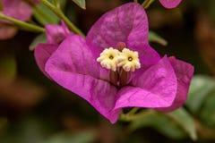 Κλείστε επάνω από ένα ρόδινο άνθος λουλουδιών εγγράφου στοκ εικόνες με δικαίωμα ελεύθερης χρήσης