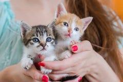 Κλείστε επάνω δύο χαριτωμένων γατακιών στα χέρια γυναικών ` s Στοκ φωτογραφία με δικαίωμα ελεύθερης χρήσης