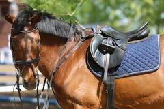 Κλείστε επάνω ενός αλόγου λιμένων κατά τη διάρκεια του ανταγωνισμού κάτω από τη σέλα υπαίθρια στοκ φωτογραφία με δικαίωμα ελεύθερης χρήσης