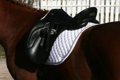 Κλείστε επάνω ενός αλόγου λιμένων κατά τη διάρκεια του ανταγωνισμού κάτω από τη σέλα υπαίθρια στοκ φωτογραφίες