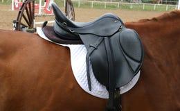 Κλείστε επάνω ενός αλόγου λιμένων κατά τη διάρκεια του ανταγωνισμού κάτω από τη σέλα υπαίθρια στοκ εικόνα με δικαίωμα ελεύθερης χρήσης