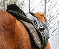 Κλείστε επάνω ενός αλόγου λιμένων κατά τη διάρκεια του ανταγωνισμού κάτω από τη σέλα υπαίθρια στοκ φωτογραφίες με δικαίωμα ελεύθερης χρήσης