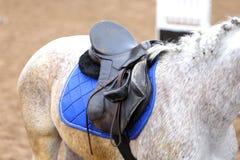Κλείστε επάνω ενός αλόγου λιμένων κατά τη διάρκεια του ανταγωνισμού κάτω από τη σέλα υπαίθρια στοκ φωτογραφία
