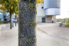 Κλείστε επάνω ενός κορμού δέντρων με την ανάπτυξη λειχήνων στο φλοιό του σε ένα Au Στοκ Εικόνες
