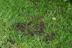 Κλείστε επάνω ενός φαλακρού σημείου σε έναν πράσινο χορτοτάπητα στοκ φωτογραφία με δικαίωμα ελεύθερης χρήσης