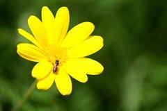 Κλείστε επάνω ενός όμορφων λουλουδιού και μιας μέλισσας στοκ εικόνες