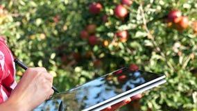 Κλείστε επάνω, θηλυκός επιχειρησιακός αγρότης ή η εργασία γεωπόνων στον κήπο μήλων, κάνει τις σημειώσεις για μια ταμπλέτα για την φιλμ μικρού μήκους