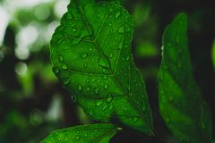Κλείστε επάνω, μακρο πυροβολισμός του φύλλου Grean στο δάσος μετά από τη βροχή στοκ φωτογραφία με δικαίωμα ελεύθερης χρήσης