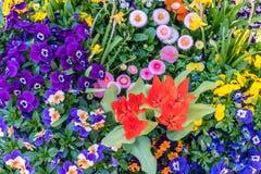 Κλείστε επάνω μιας συλλογής των διακοσμητικών λουλουδιών σε ένα δοχείο λουλουδιών την άνοιξη Στοκ Εικόνα