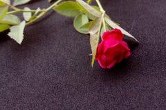 Ρόδινος αυξήθηκε λουλούδι στοκ εικόνες