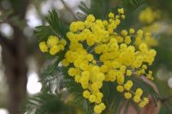 Κλείστε επάνω στα κίτρινα λουλούδια στην άνοιξη στοκ φωτογραφία