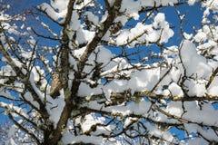 Κλείστε επάνω στα χιονώδη καλυμμένα nude δέντρα στα ιουλιανά όρη στο μπλε ουρανό στη χειμερινή εποχή Στοκ φωτογραφίες με δικαίωμα ελεύθερης χρήσης