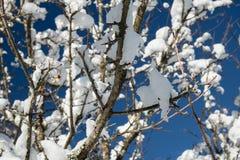 Κλείστε επάνω στα χιονώδη καλυμμένα nude δέντρα στα ιουλιανά όρη στο μπλε ουρανό στη χειμερινή εποχή Στοκ εικόνες με δικαίωμα ελεύθερης χρήσης