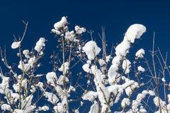 Κλείστε επάνω στα χιονώδη καλυμμένα nude δέντρα στα ιουλιανά όρη στο μπλε ουρανό στη χειμερινή εποχή Στοκ Εικόνες